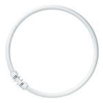 Osram Leuchtstofflampe Ringform FC 22W/840